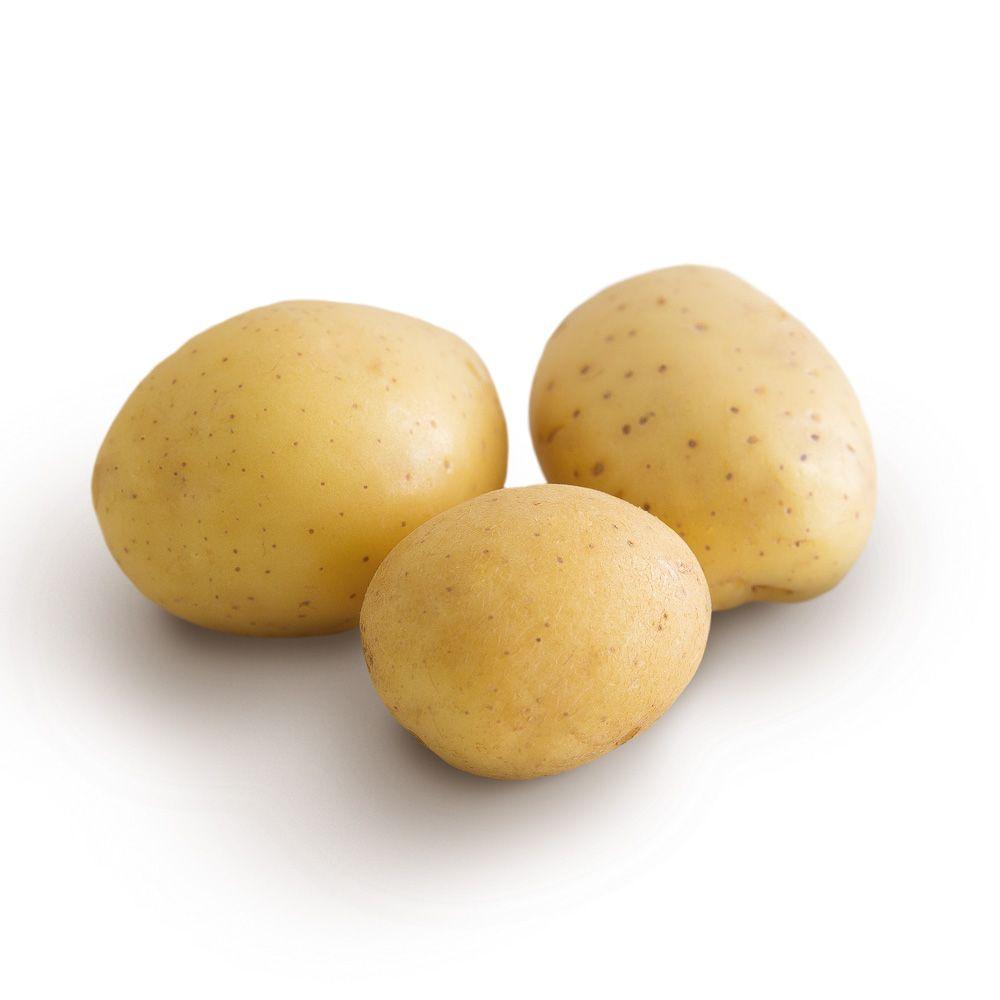 photo de pomme de terre